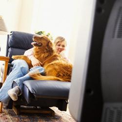 dog-watching-tv